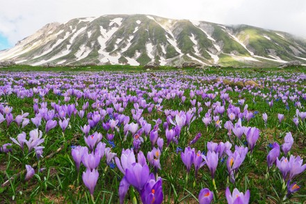 Spring at Campo Imperatore (Aq, Italy)